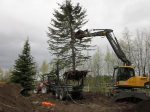 Gällivare trädflytt