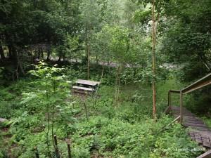 Changbai Shan i Arboretum Norr, med nyplanterad manchurisk ask, Fraxinus mandshurica  i förgrunden. Björken invid trappan är en Kamtjatkabjörk av den mer rakvuxna typen, insamlad på Kamtjatka.