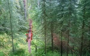Svartgransskogen