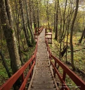 Tores trappa är döpt efter Tore Karlsson i Baggböle som skänkte mark till Stiftelsen Arboretum Norr så att denna trap skulle kunna bli verklighet.