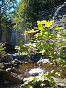 Japanska Trädgården